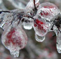 winter2012